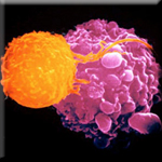 Vitamin D Directs T-Cells to Attack