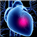 Small Increases in Belly Fat Affect the Arteries