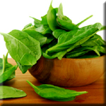 Spinach Has Natural Immune Boosting Abilities