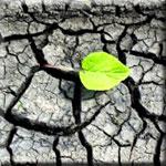 Soils are Nutrient Deficient Due to Overfarming Practices