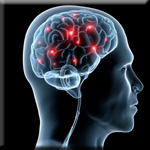 Resveratrol Can Inhibit Brain Deterioration