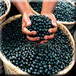Acai Berries Directly Limit Brain Plaque Formation
