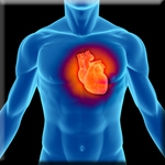 DHA Boosts Energy Production in Heart Muscle Cells