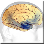 Body Weight in Mid-Age Linked With Higher Rates of Dementia and Cognitive Decline