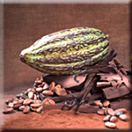 Cocoa Polyphenols Improve Vision and Mental Fatigue
