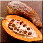 Cocoa is a Potent Antioxidant that Lowers Diabetes Risk