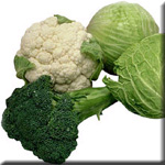 Broccoli and Brassica Vegetables Lower Risk of Most Common Type of Colon Cancer