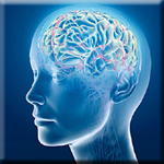 Zinc is Essential to Improve Synaptic Plasticity and Learning Abilities