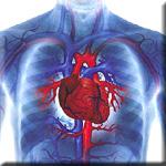 Vegetables Lower Heart Disease Risk in Predisposed Individuals