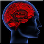 Resveratrol and Nuts Lower Brain Inflammation to Improve Mood